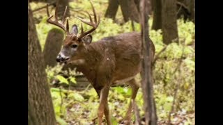 Special deer hunts this month to combat chronic wasting disease
