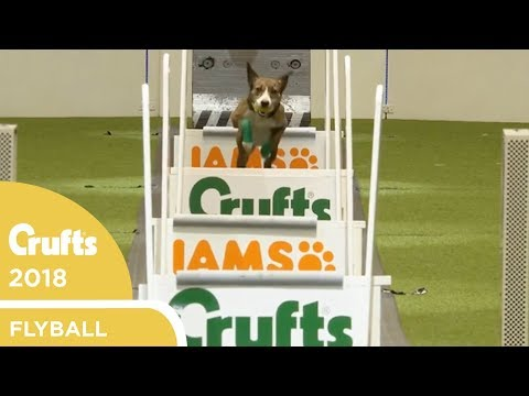 Flyball - Team Quarter-Finals | Crufts 2018