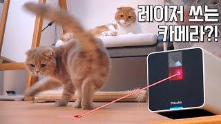 레이저 쏘는 고양이 전용 IP카메라 펫큐브 리뷰