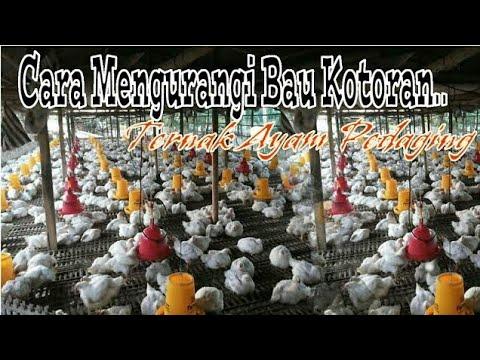 Salinan dari Cara mengurangi Bau Kotoran Pada Budidaya ...
