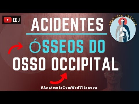 Acidentes Anatômicos do osso Occipital