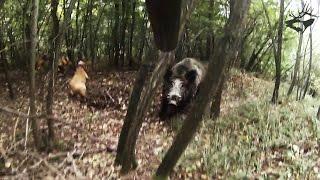 TOP-5 страшных атак кабана на охотника / attack of wild boar 2017(, 2017-04-24T14:25:18.000Z)