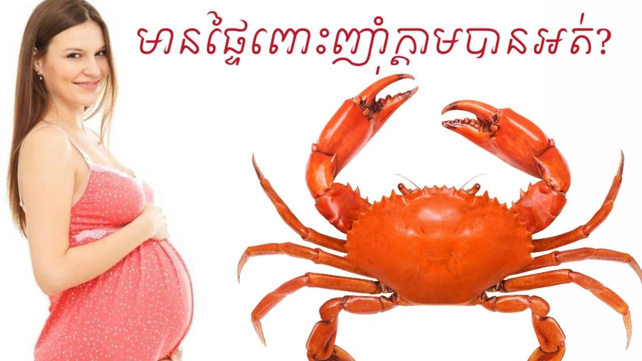 មានផ្ទៃពោះញ៉ាំ ក្តាម បានអត់  pregnancy can eat crabdr