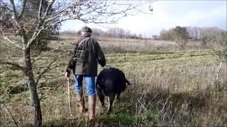 Cavage de truffes dans le Périgord