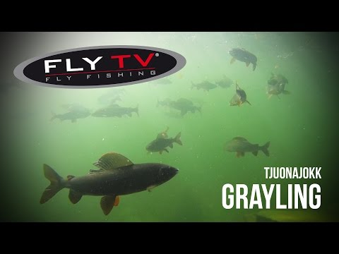 FLY TV - Tjuonajokk Grayling - Epic Dry Fly Fishing in the Swedish Mountains