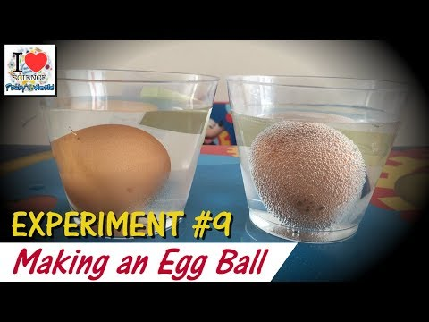 an analysis of an experiment with vinegar and egg