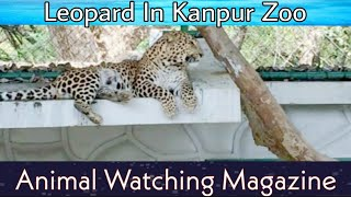Allen Forest zoo or Kanpur Zoo || Leopard || Animal watching Magazine ||