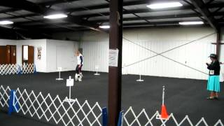 Akc Rally Obedience Novice A