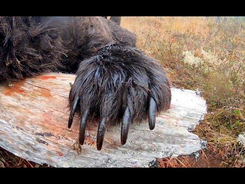 Самый большой медведь за последние 5 лет. The Largest Bear In The Last 5 Years.