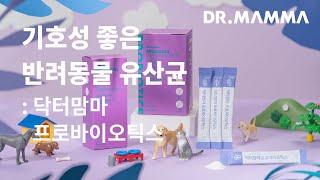 닥터맘마 프로바이오틱스: 기호성 좋은 반려동물 유산균