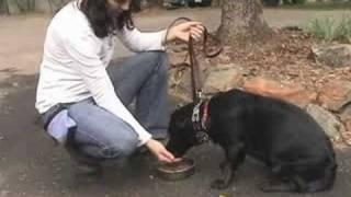 Sacramento Dog Training - Edk9 - Chloe