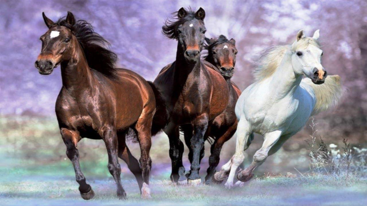 Chevaux au galop youtube - Comment dessiner un cheval au galop ...
