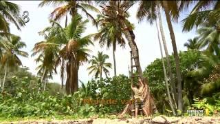 Survivor All Star - Anıl, Hasan'ı Akrepten Kurtardı (6.Sezon 61.Bölüm)