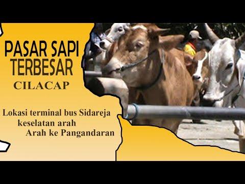 Pasar sapi terbesar di Cilacap
