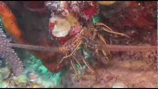 Багамские острова Таинственные пещеры и затонувшие корабли 2013
