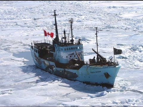 The Canadian Commercial Seal Hunt