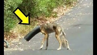 Našli su na ulici povrijeđenu životinju. Kad su joj skinuli cijev, nisu mogli da VJERUJU šta vide ! thumbnail