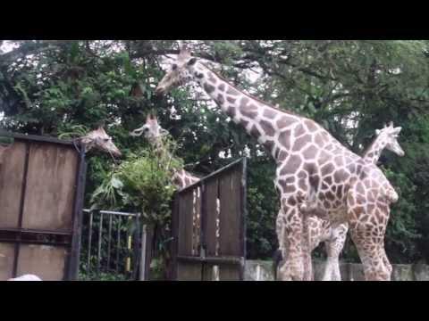 Animal Lovers trip to Zoo Negara