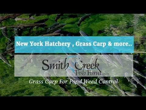 Virtual Hatchery Tour Grass Carp, Crappie,Trout And More