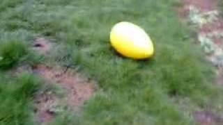せっかく買ったこのボール、なぜかアイスは怖がります。 そうして?