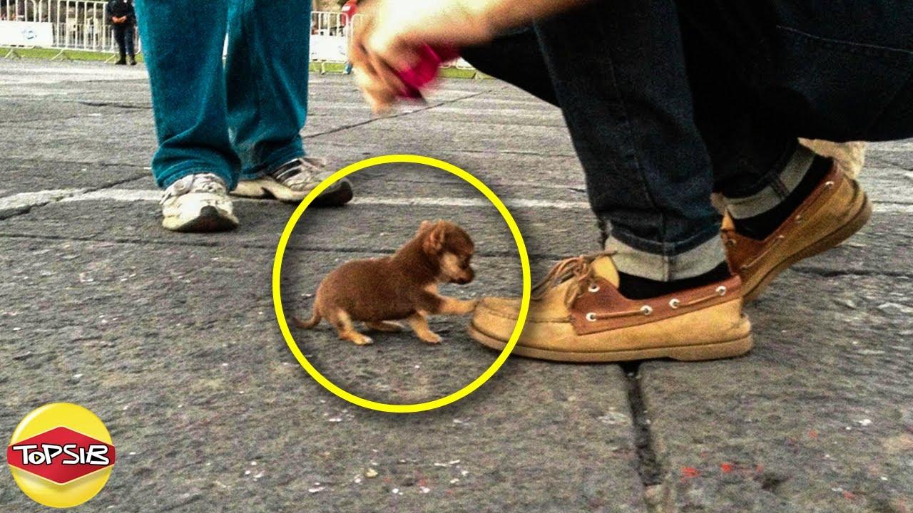 12 อันดับ สุนัขที่มีขนาดเล็กที่สุดในโลก (น่ารักจุ๋มจิ๋ม)