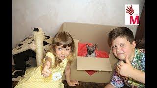 Беременная кошка сфинкс делаем картонный безопасный домик роддом для кошки и котят своими руками
