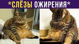 Приколы с котами. Слёзы ожирения | Мемозг #195