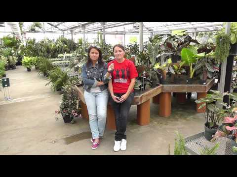 Garden Center internship in the USA provided by The Ohio Program