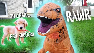 T-REX DINOSAUR SUIT PRANK ON DOG!