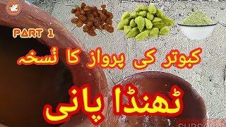 Kabootar Baaz   Kabooter Ki Parwaz Ka Nuskha   Part 1   Kabuter Kai Liye thanda Paani    kabooter