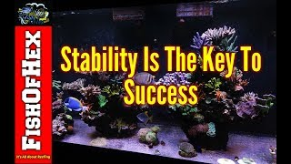 How To Create A Stable Reef Tank