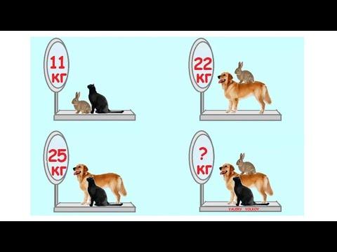 Задача собака и заяц решение леонтьев решение задач