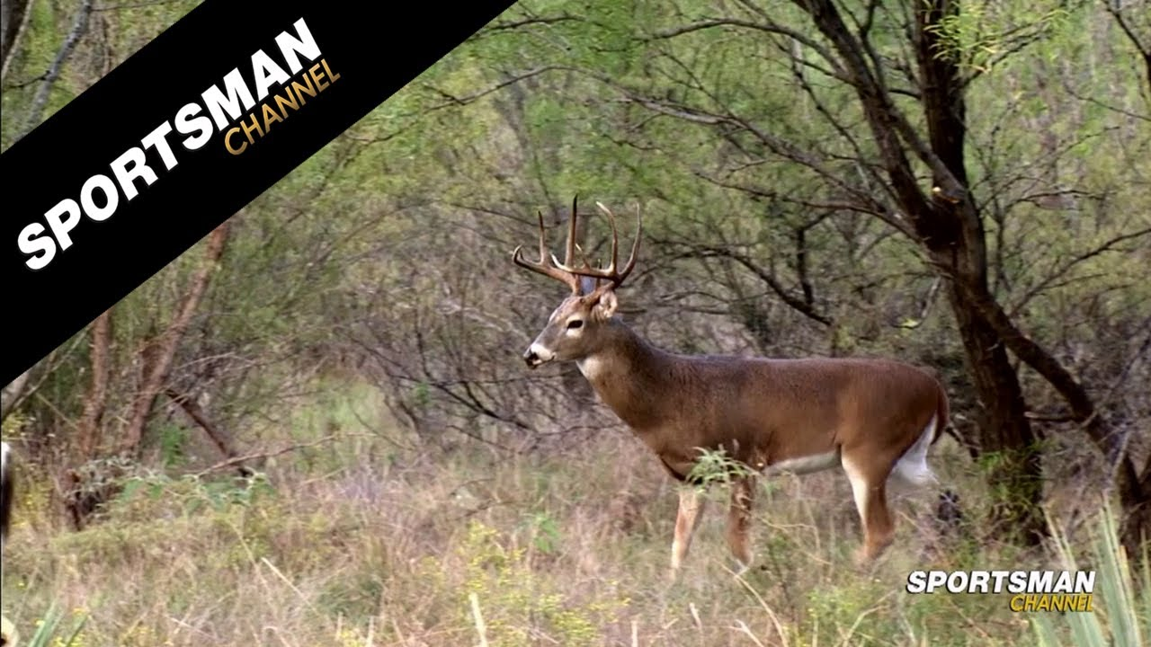 Whitetail slam