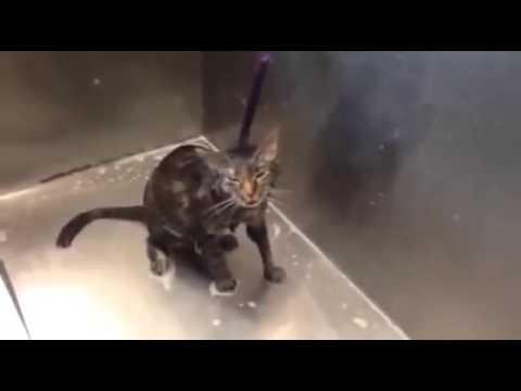 Questo gatto non ne può più del suo bagnetto!