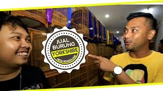 BIRD MARKET : Jual Kenari Yorkshire Yunani Di TJM Canary Bird Shop