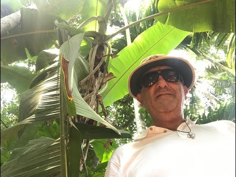 Tropical Spice Plantation   Old Goa India