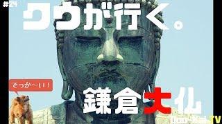 【名所】これが日本三大大仏だッ!!@鎌倉【#24】