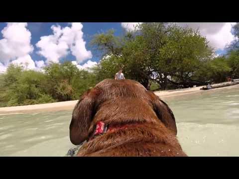 Dog beach- Hickam AFB
