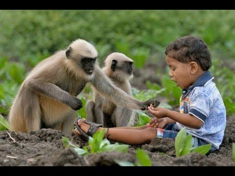 Monky Danse, monkey king 3