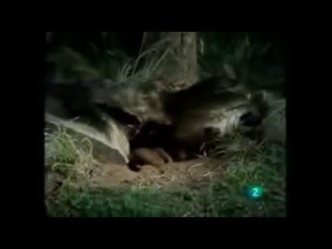 Ведьмак 2: Убийцы королей — Википедия