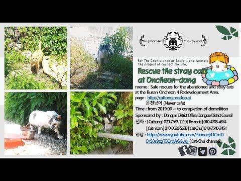 [Cat-Chu] Saving Oncheon Kitties, Special Project