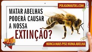 a extino das abelhas pode acabar com a humanidade   poligopocket