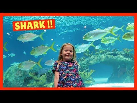 Visiting OdySea Aquarium in Scottsdale Arizona !!!