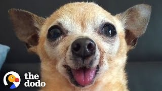 Here's Why You Should Adopt a Senior Dog | The Dodo thumbnail