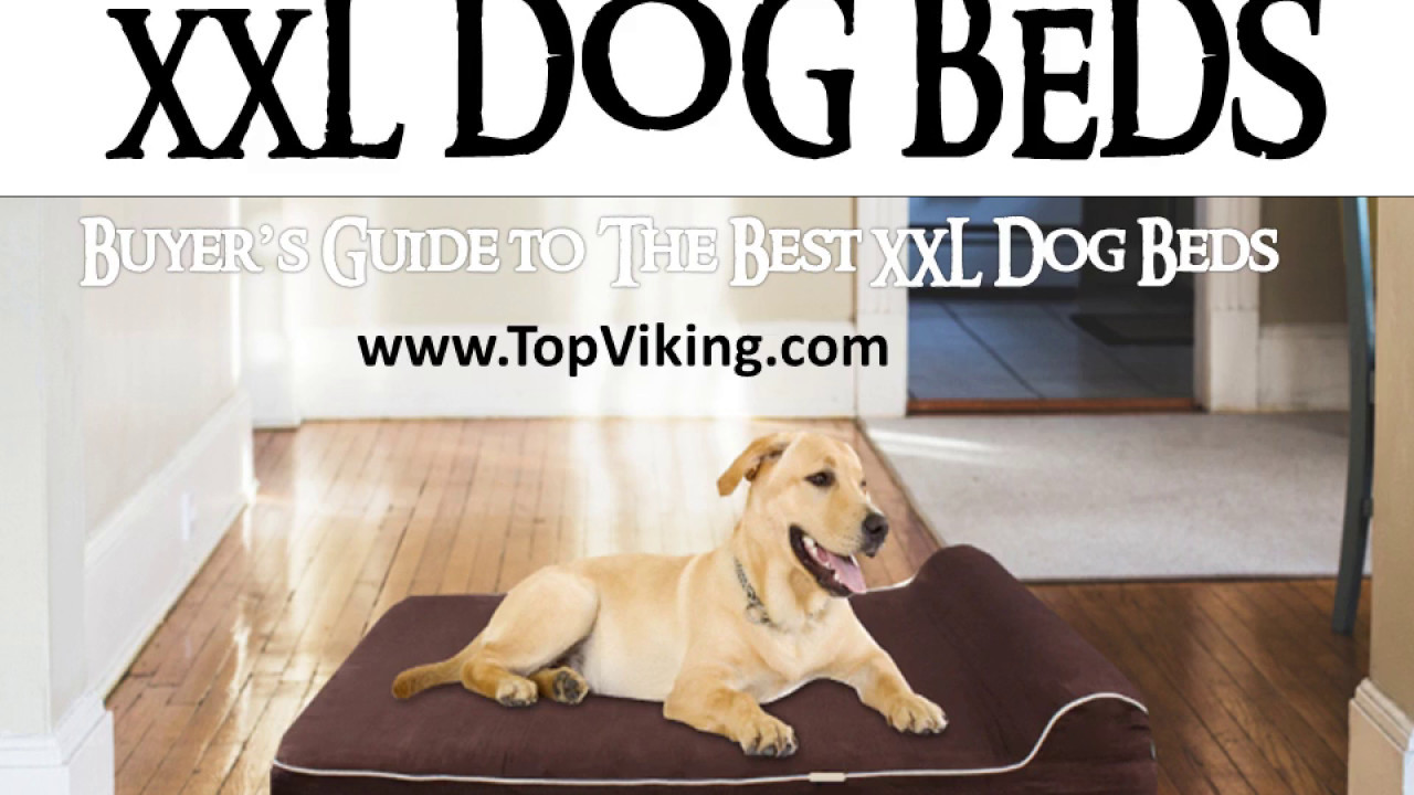best xxl dog beds - buyer's guide - youtube