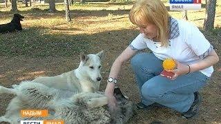 Как надымчане заботятся о бездомных собаках и кошках