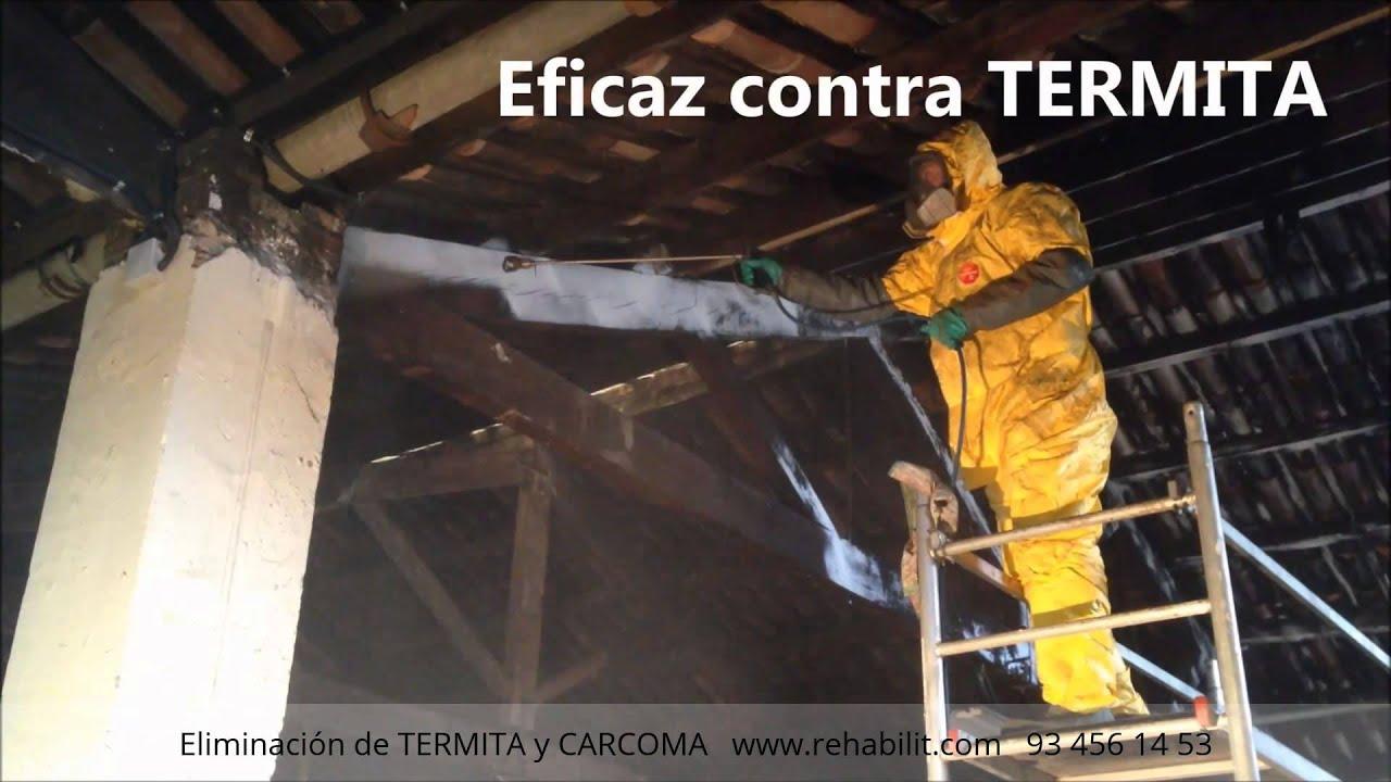 Termita y carcoma tratamiento de la madera con gel youtube - Tratamiento de la madera ...