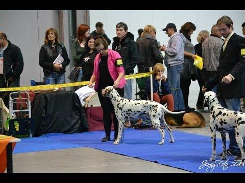 XXV. DOUBLE CACIB PRAGUE EXPO DOG LETŇANY 02.11. 2013 Guliver a CH.Falco Petrovický vítr