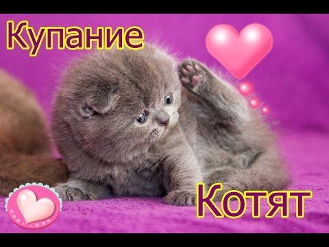 Вопрос: Чем купать котика, кошечку?