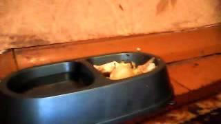 домашнее животное кот 2